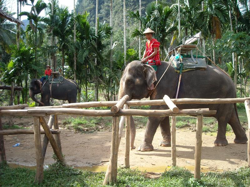 与大象嬉戏.jpg