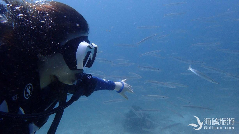 圈子 普吉岛潜水