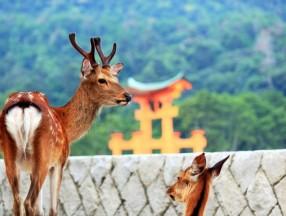 来日本广岛县与猫咪、小鹿、鲸鱼做朋友吧_日本旅游_日本自由行