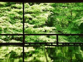草长莺飞的季节,感受日本京都的美_京都旅游_日本旅游