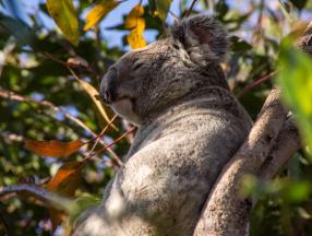澳大利亚旅游实用信息介绍,语言,通讯,WIFI,插头,穿衣指南等旅游相关实用信息