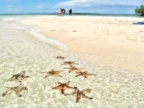 菲律宾公主港跳岛一日游(鲁丽岛+玛瑙贝岛+海星岛)