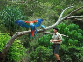 黄金海岸可伦宾野生动物园