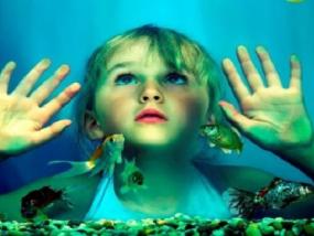 墨尔本海洋生物水族馆