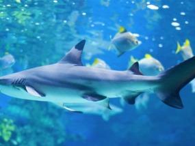 伦敦海洋生物水族馆