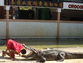 泰国北榄府鳄鱼湖动物园
