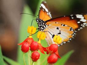 圣淘沙蝴蝶园与昆虫王国
