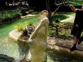 悉尼爬行动物园