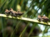 Bali Bird Walks