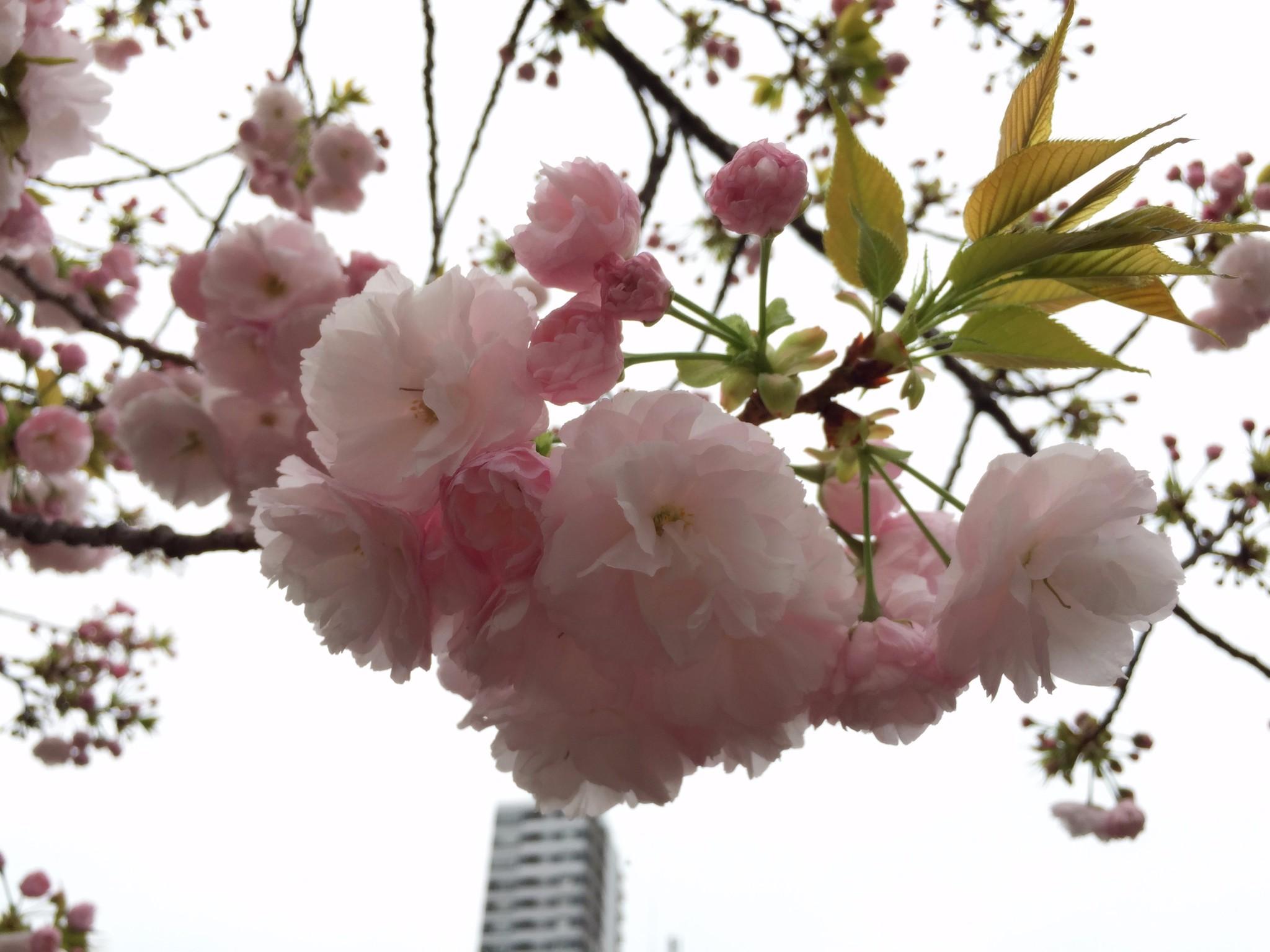 日本造币局大阪分局