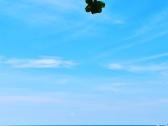 普吉岛最新实用小贴士!
